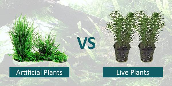Live VS Fake Plants Charles Howell Interior Design